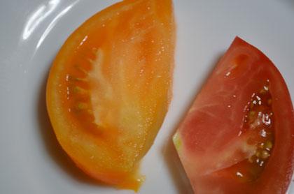 キイロトマト2