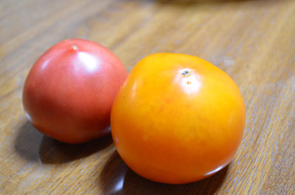 キイロトマト